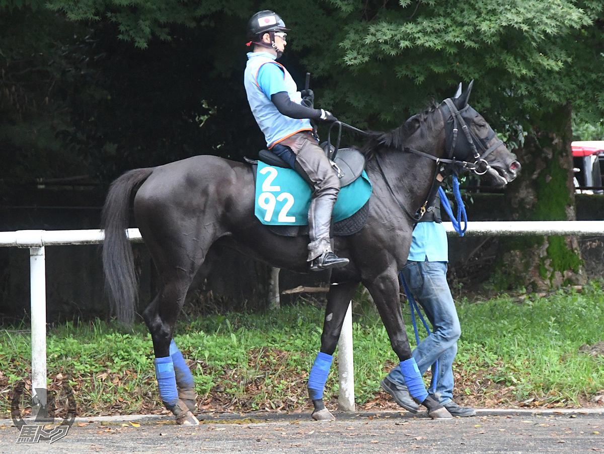トロイメントの馬体写真