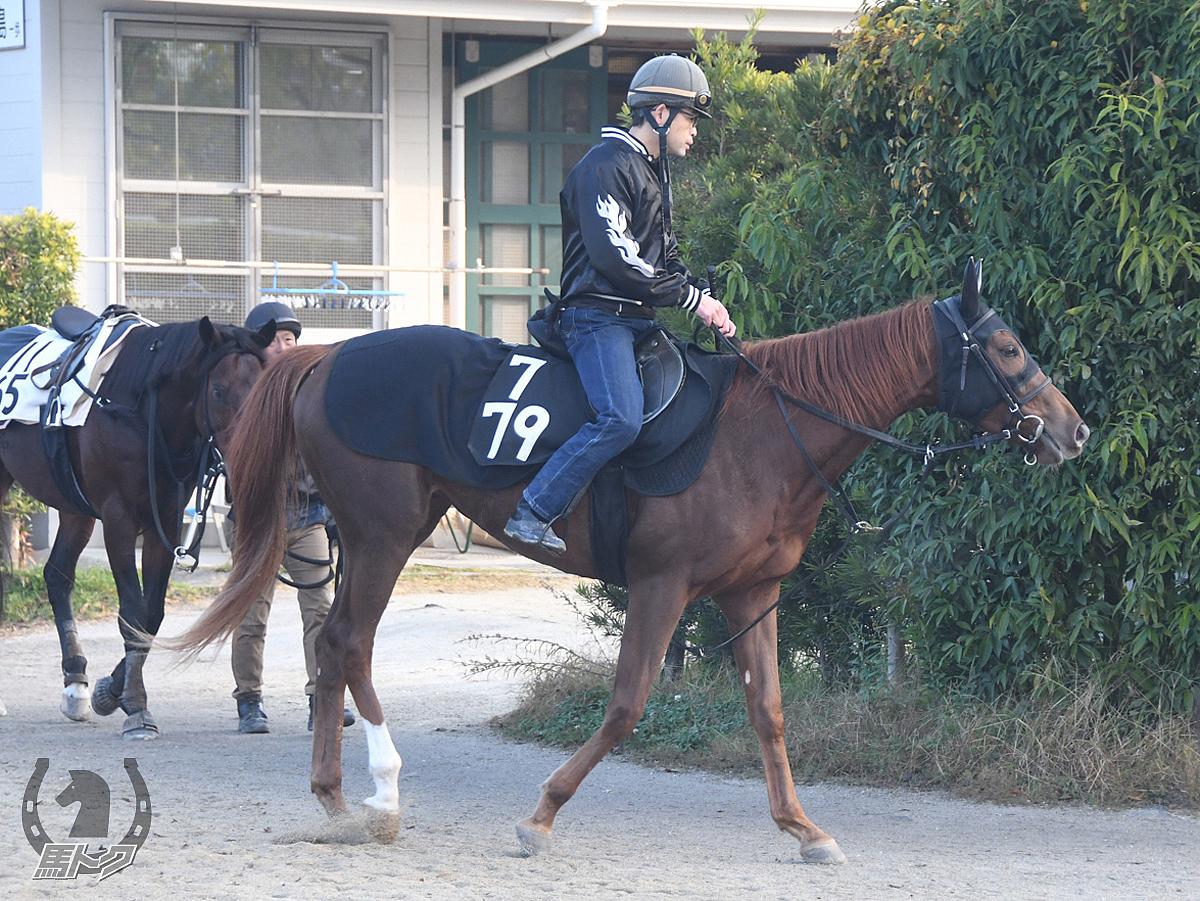 バブリーダンスの馬体写真