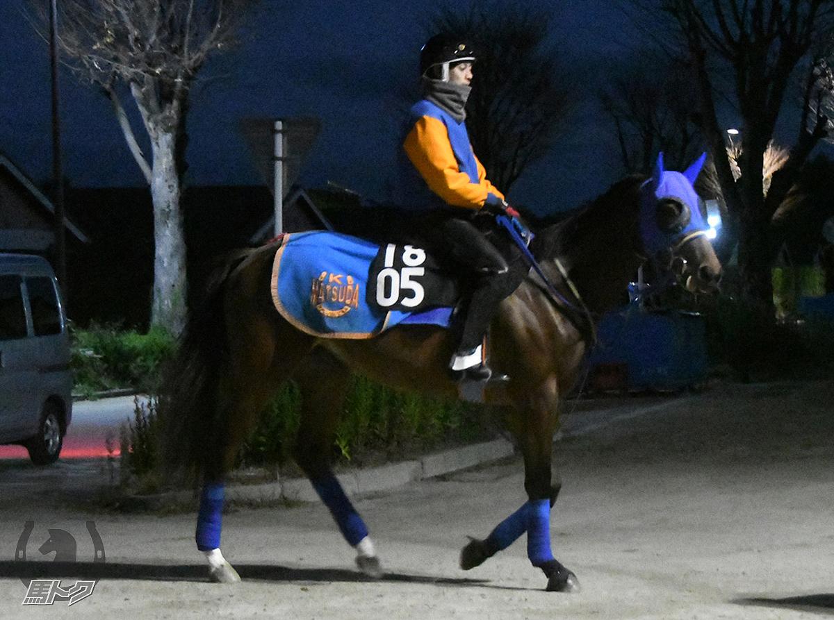 サイモンオーキッドの馬体写真