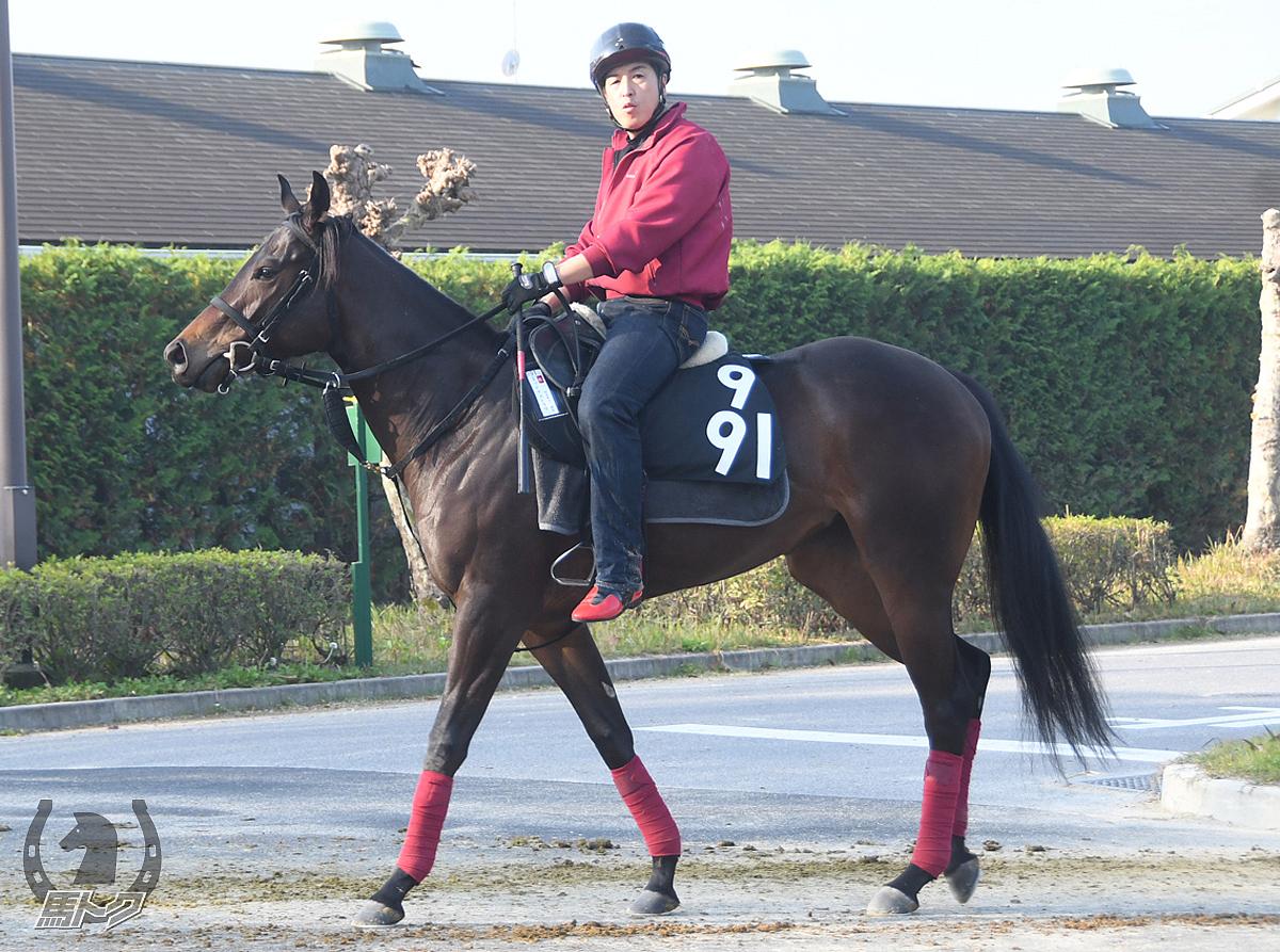 ミッドナイトラヴの馬体写真