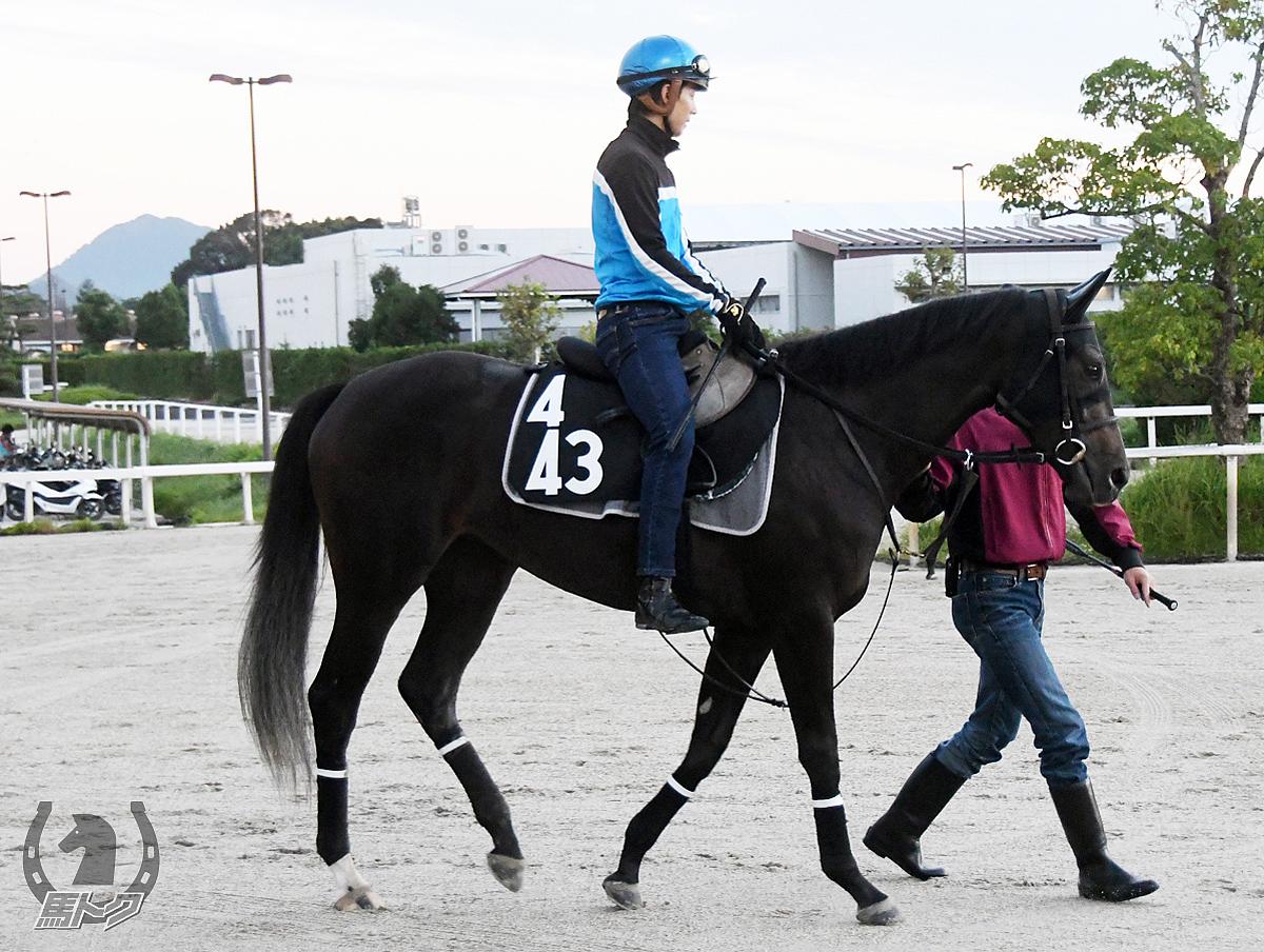 シャルムダムールの馬体写真