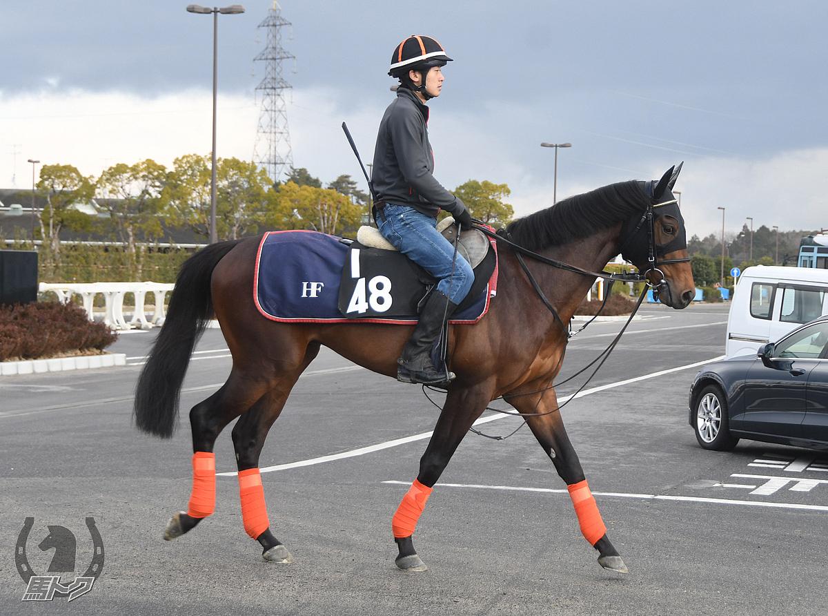 エイカイボルトの馬体写真