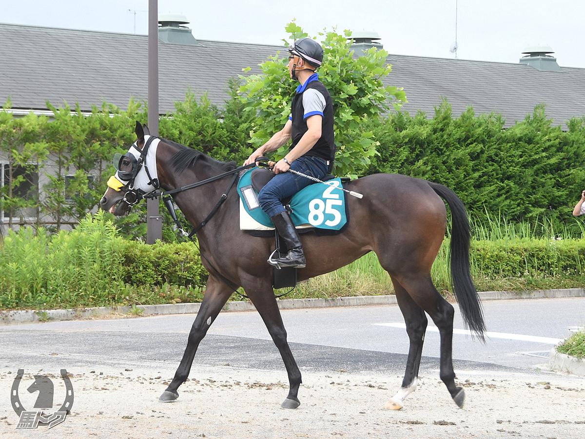 ジョーノベリスタの馬体写真