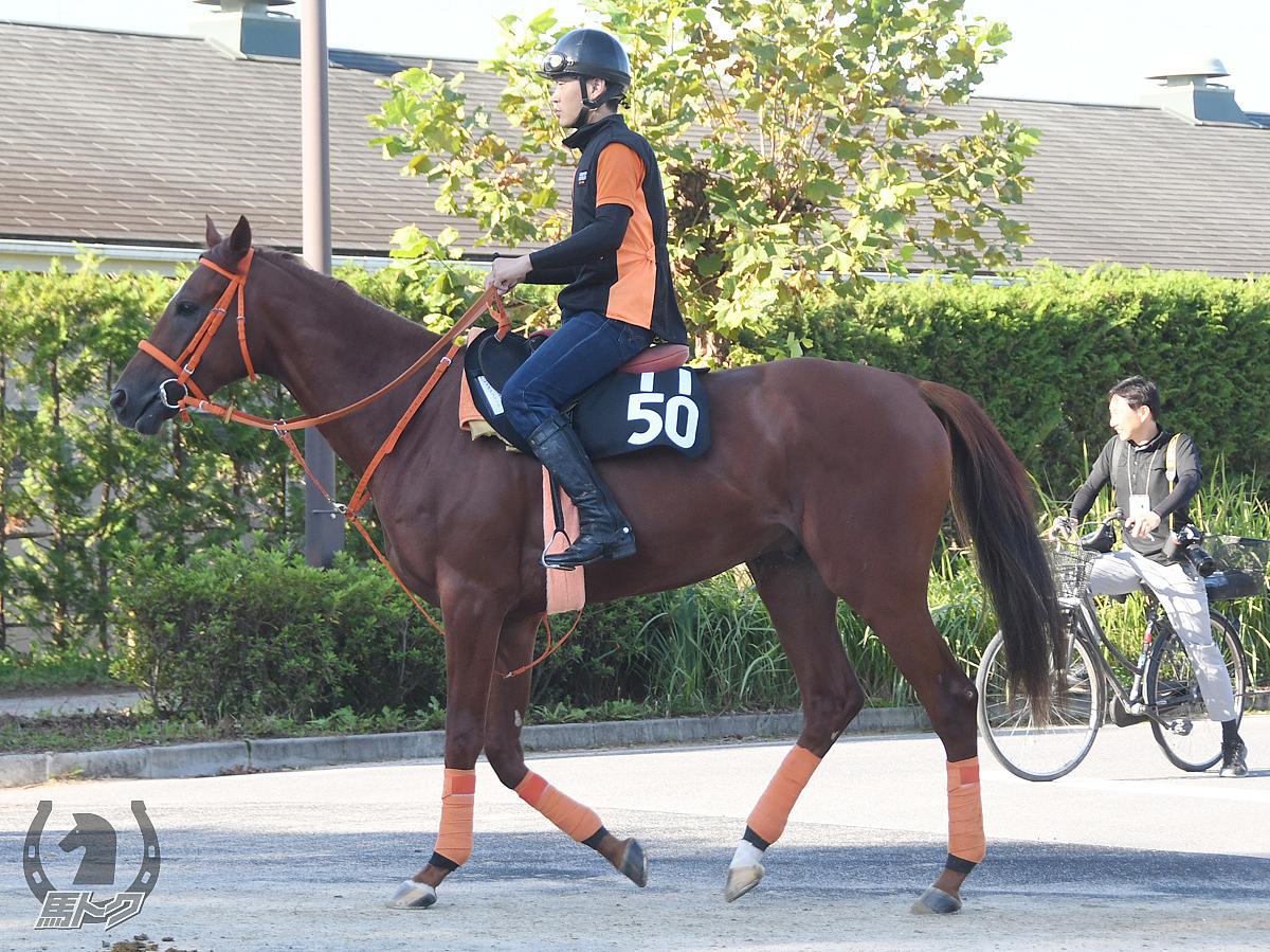 レイズアフラッグの馬体写真