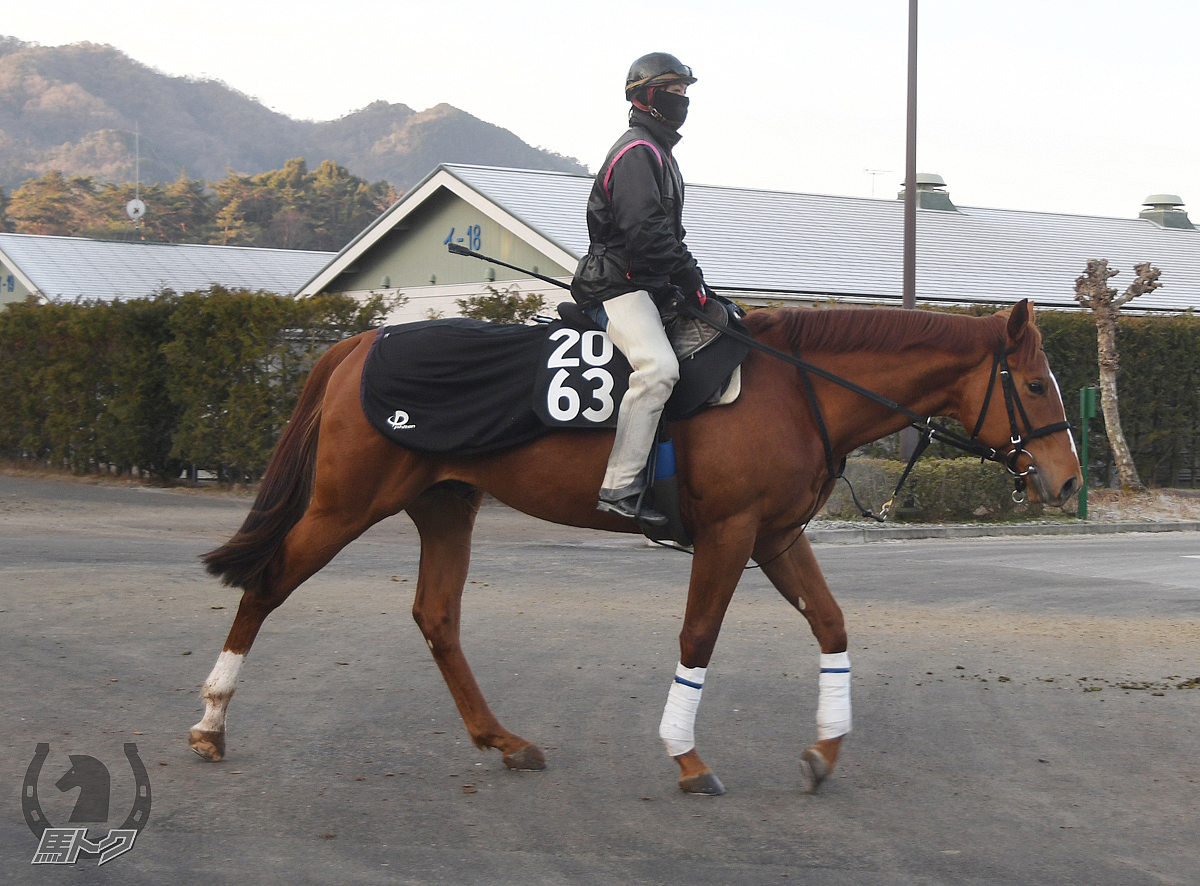 テキーラの馬体写真