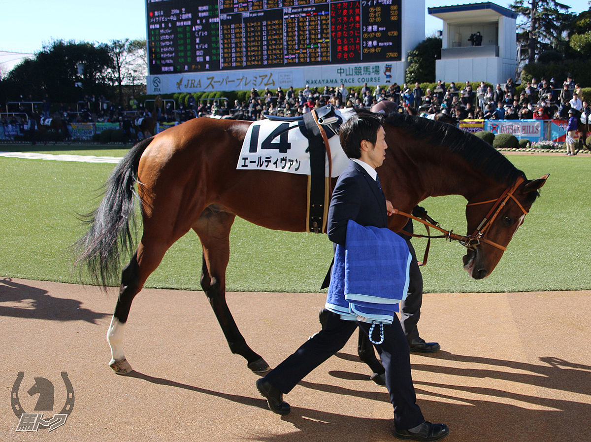 エールディヴァンの馬体写真