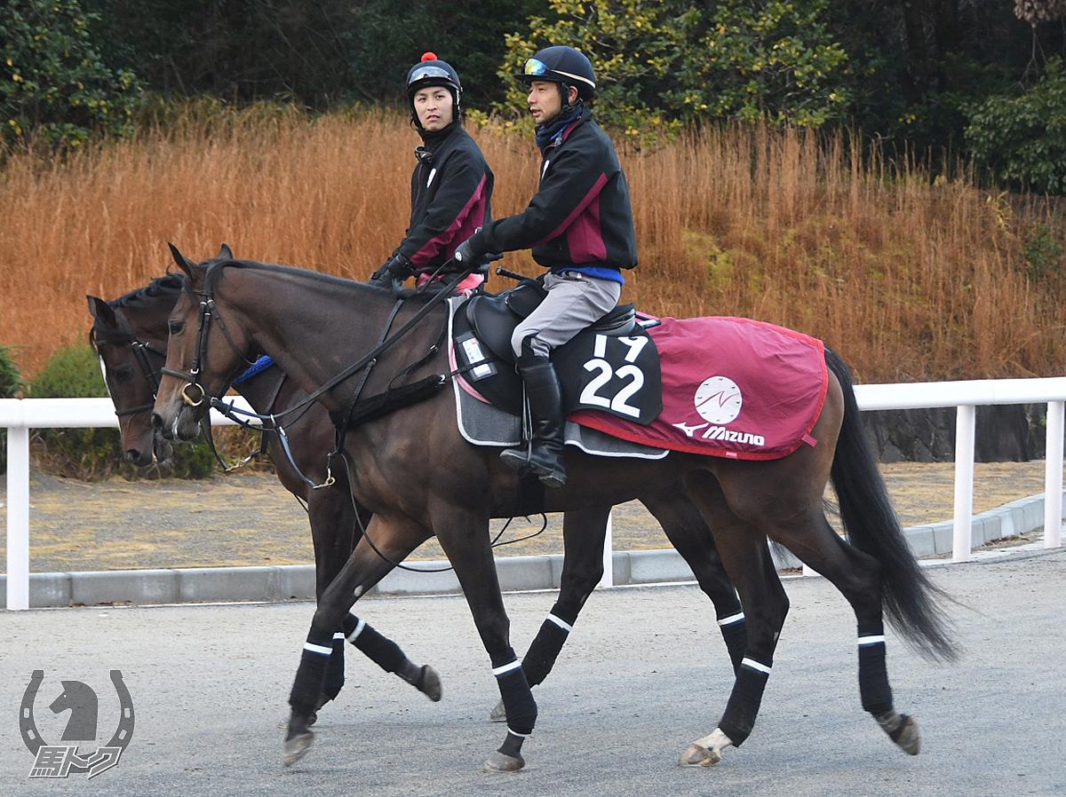 アンドラステの馬体写真