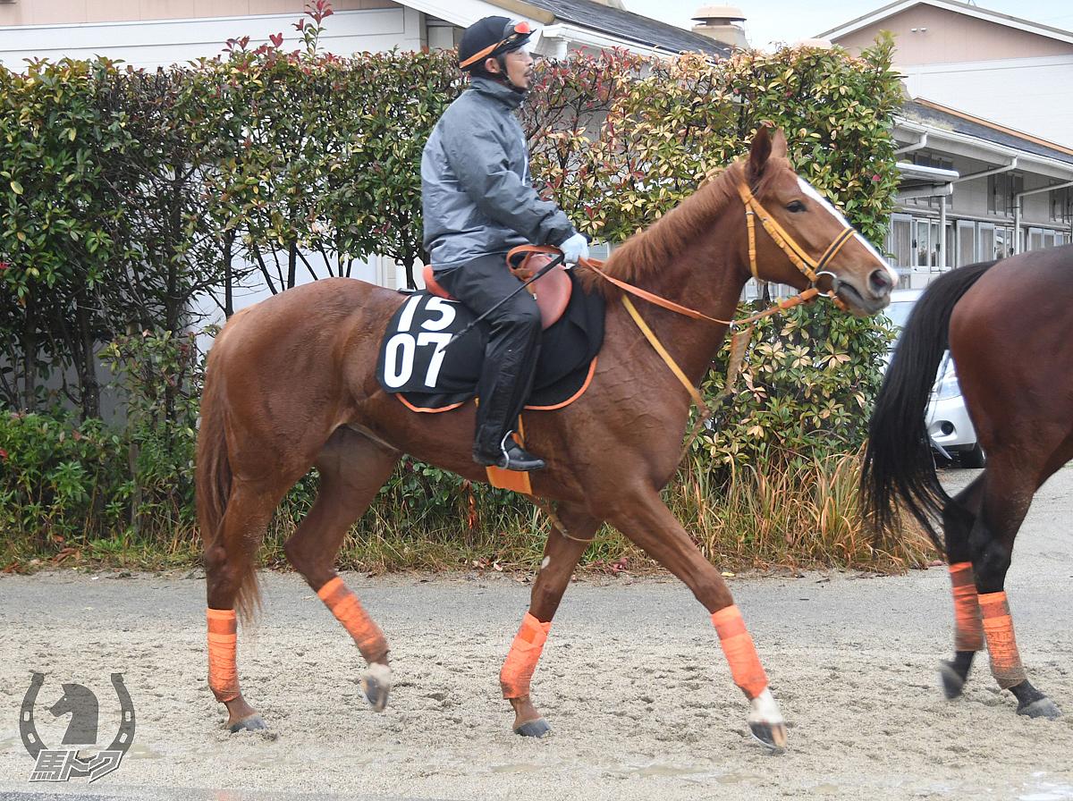 リトミカメンテの馬体写真