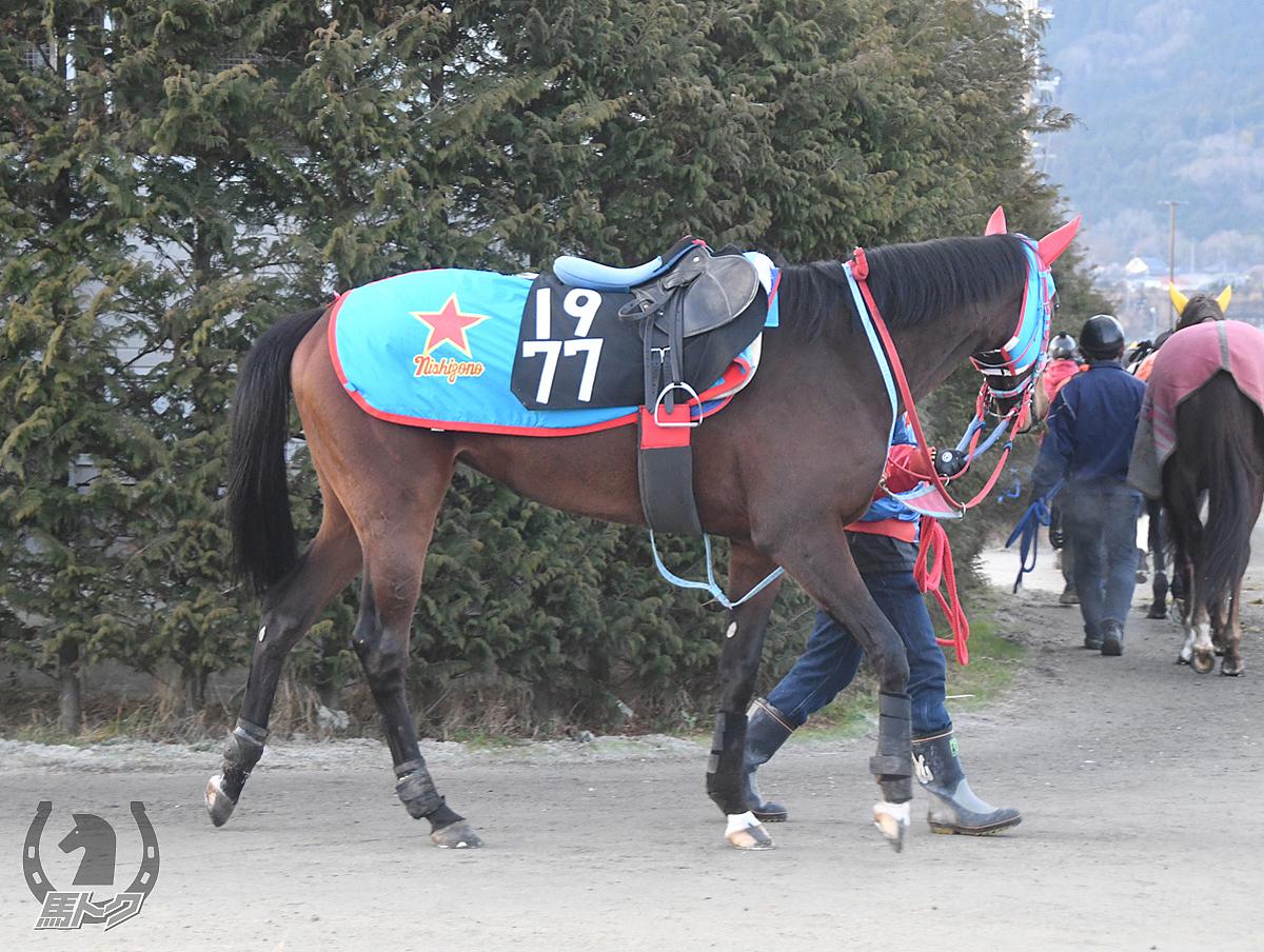 トレミエールの馬体写真