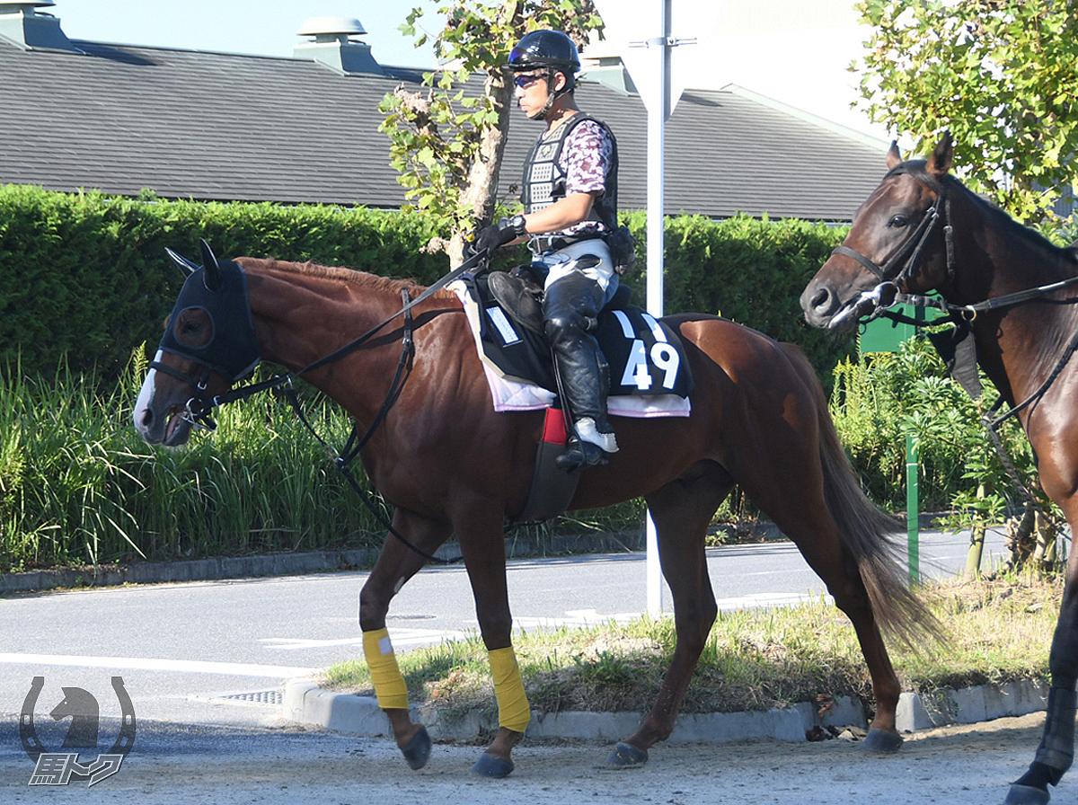 レイジングブレイズの馬体写真