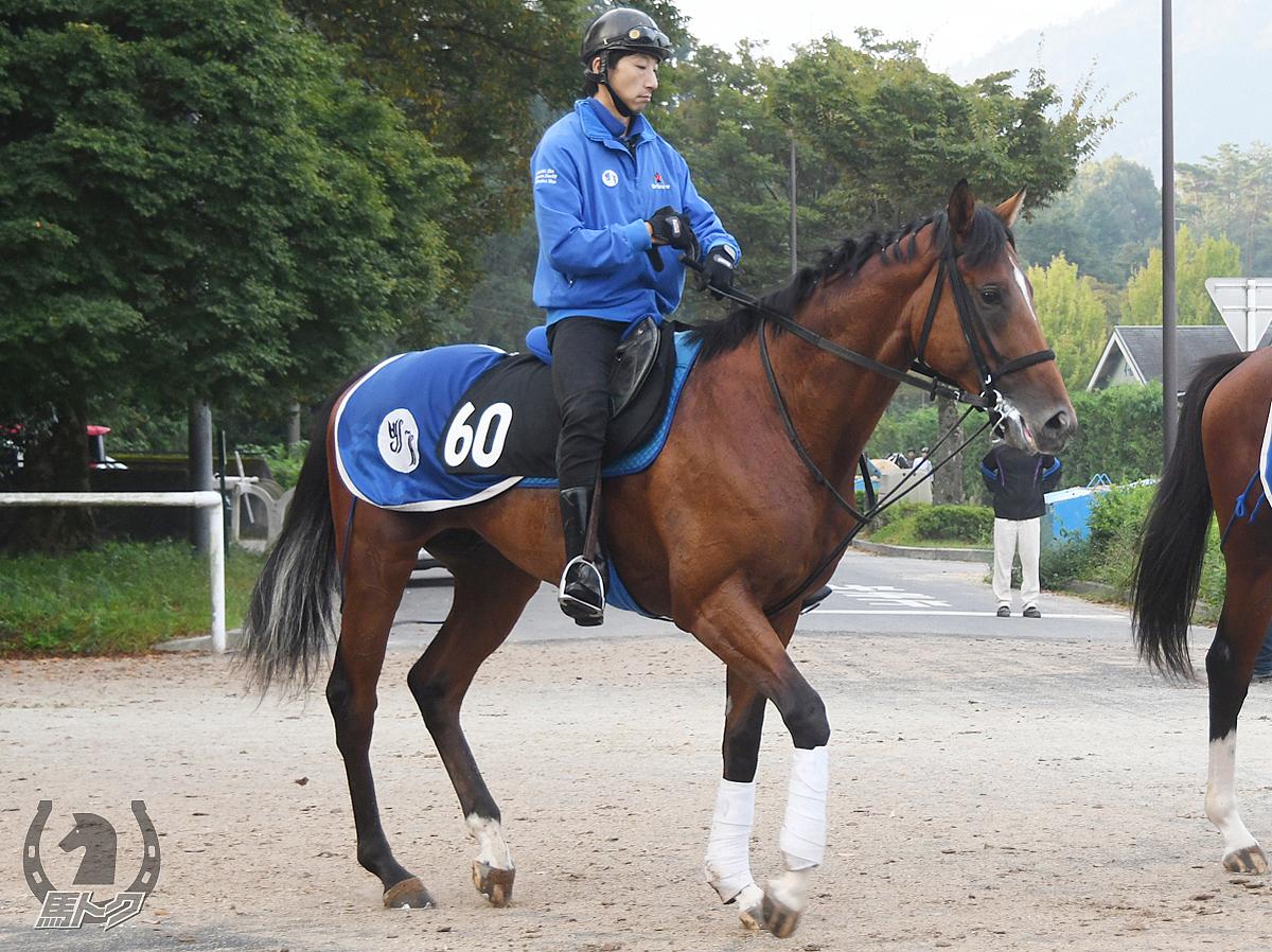 アルディテッツァの馬体写真