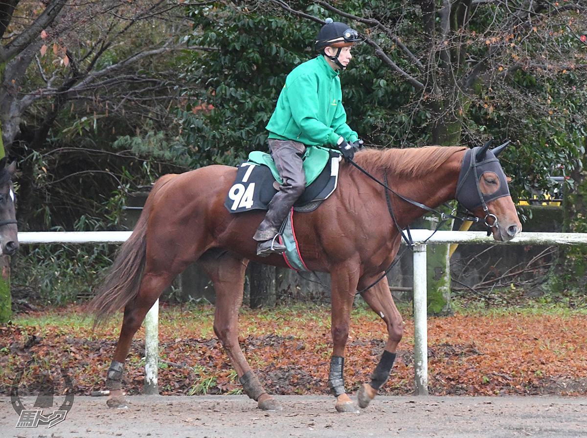 ハートスナッチャーの馬体写真