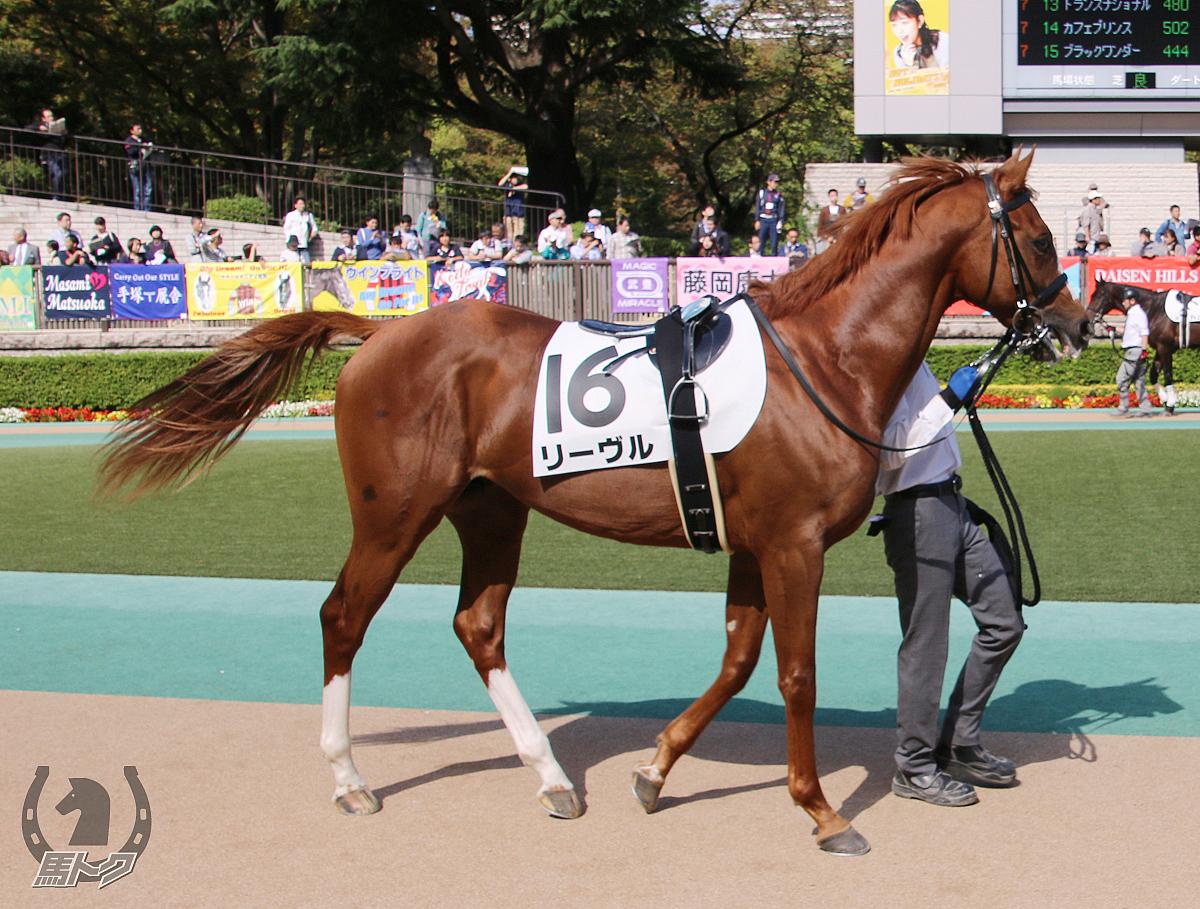 リーヴルの馬体写真