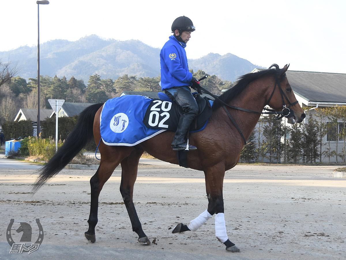 アヴァターラの馬体写真