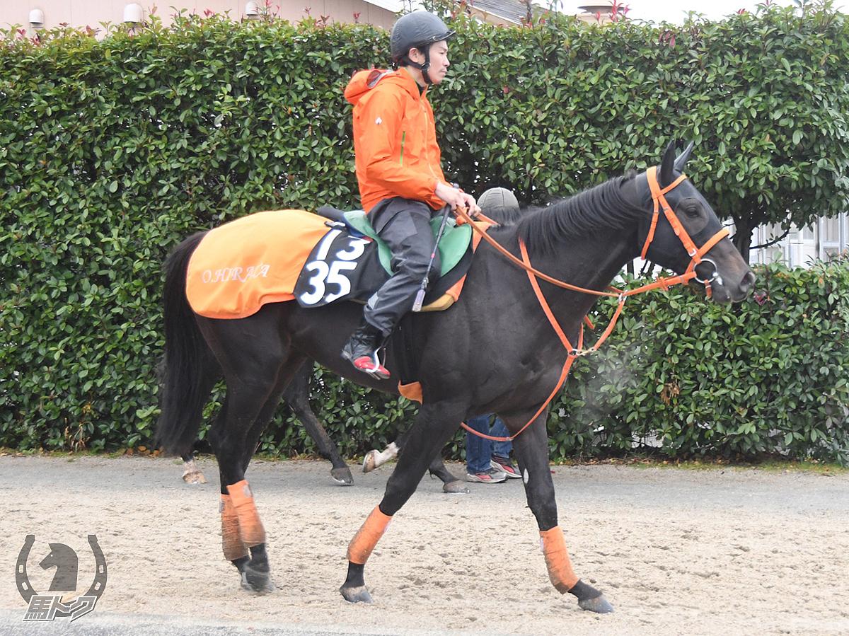 エルラティオの馬体写真