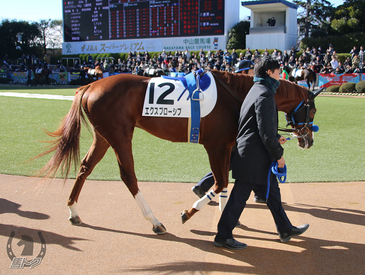 エクスプローシブの馬体写真