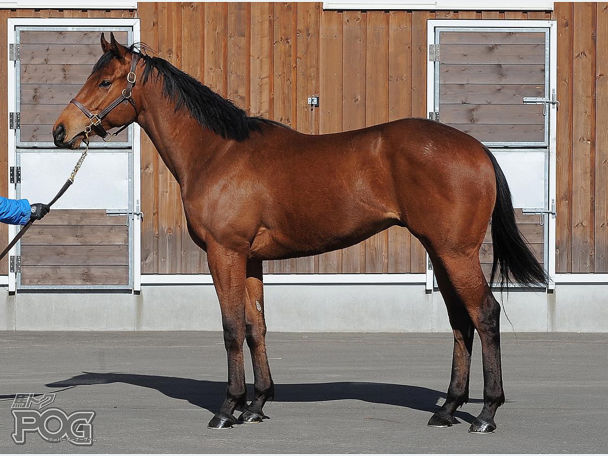 ユアーズトゥルーリの馬体写真