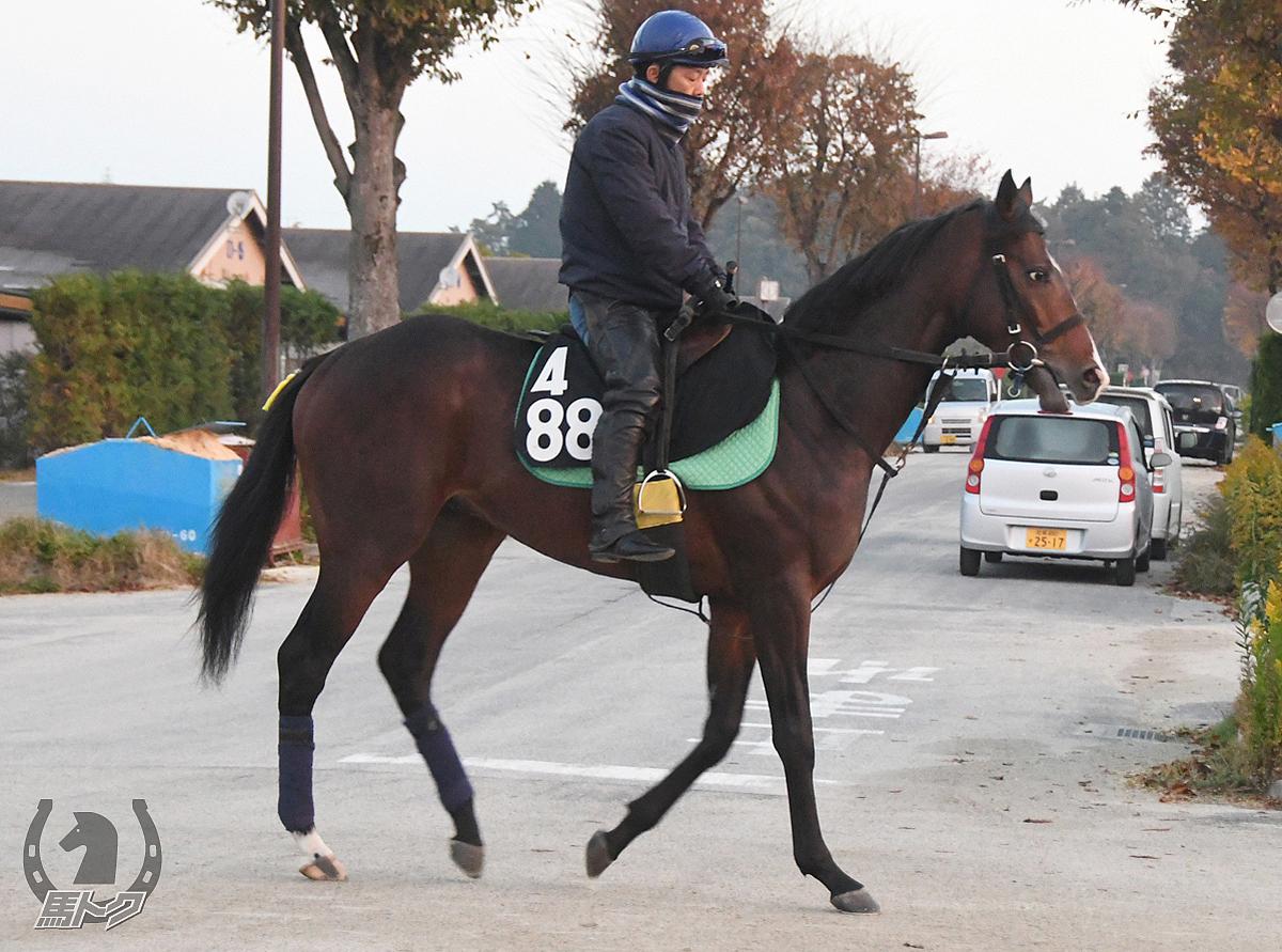 スキッピングロックの馬体写真