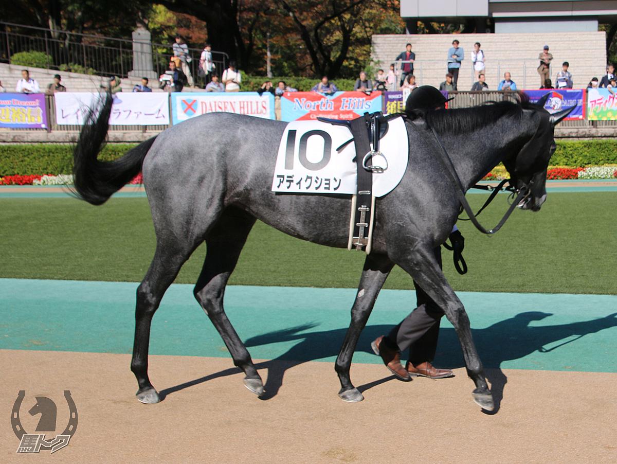 アディクションの馬体写真