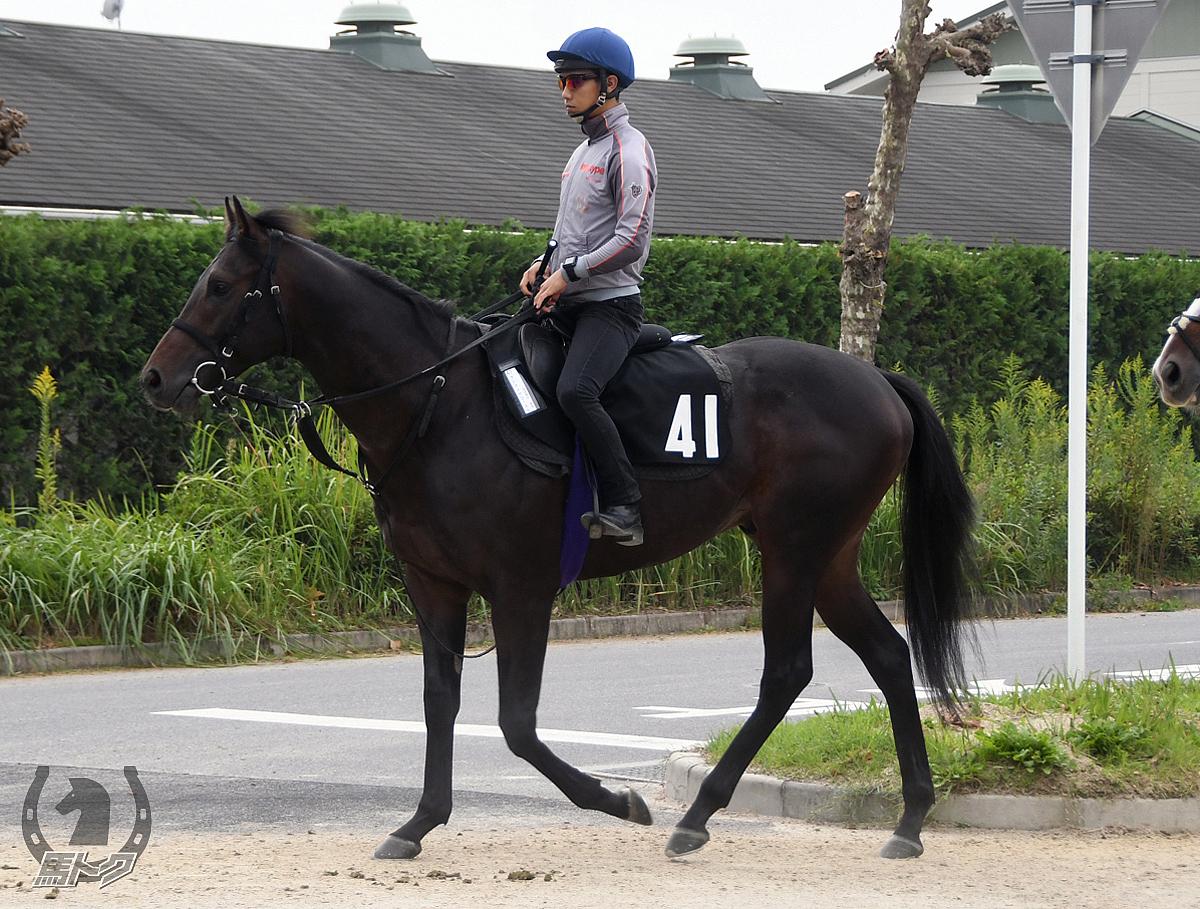 アドマイヤコーストの馬体写真