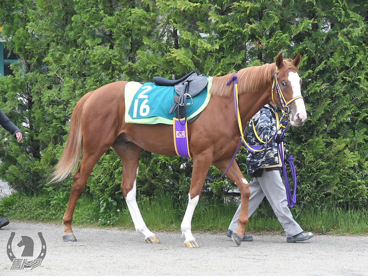 アドマイヤリーブラの馬体写真