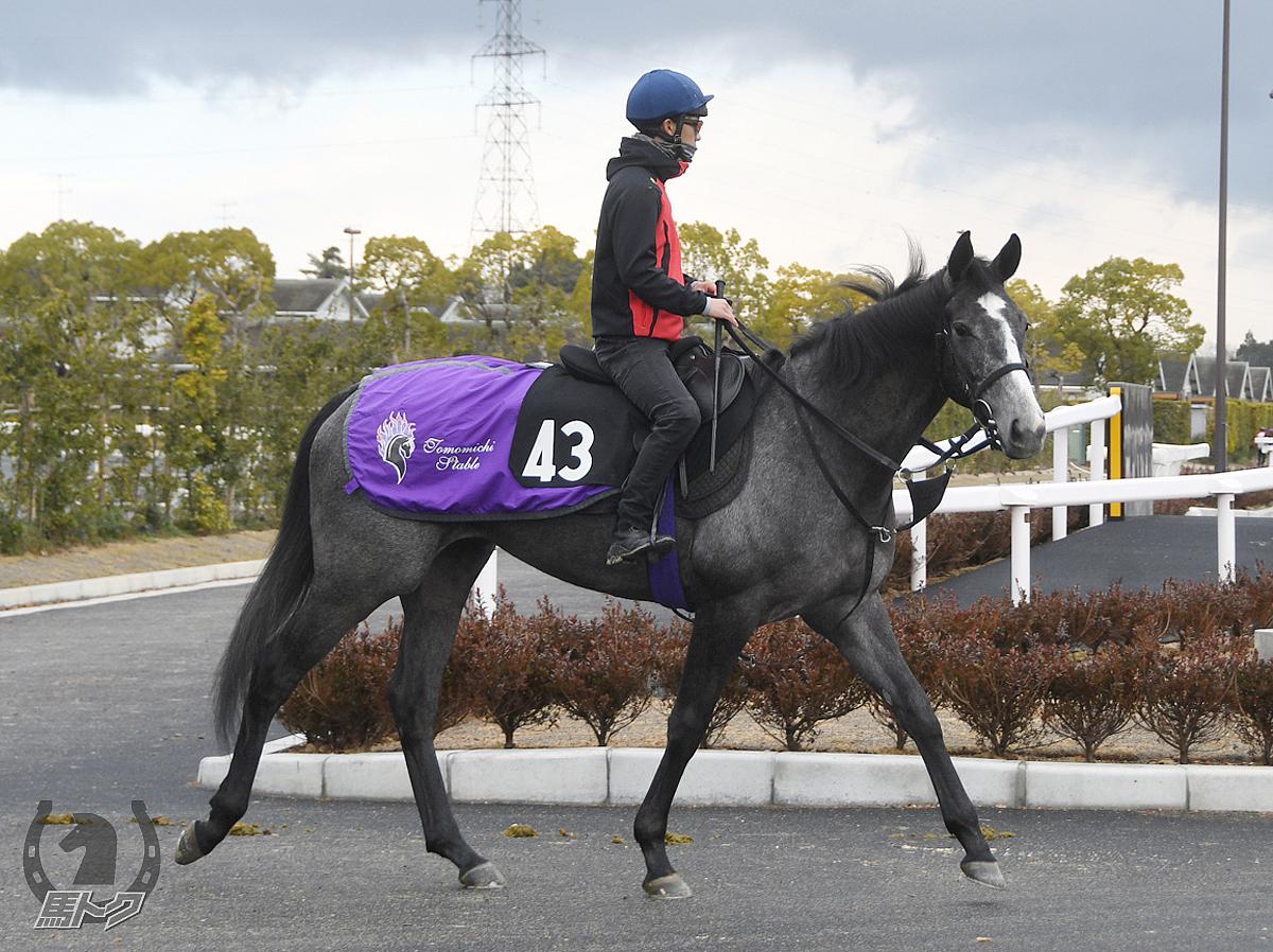 アドマイヤジョイの馬体写真