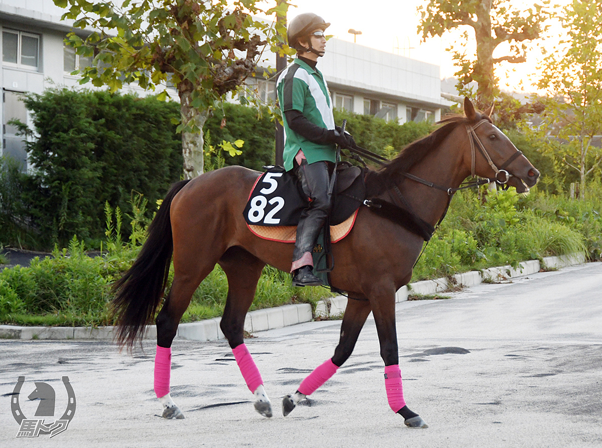 タガノクロシェットの馬体写真