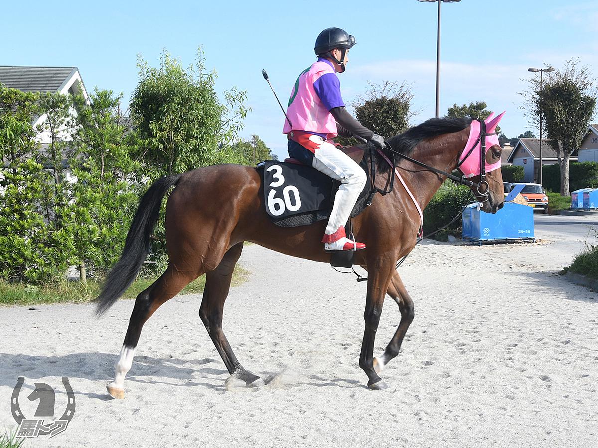 コパカティの馬体写真