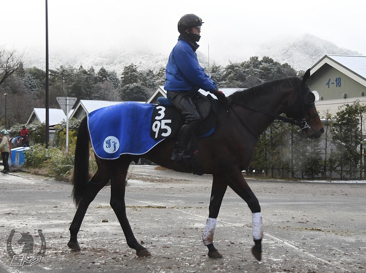 サトノソロモンの馬体写真