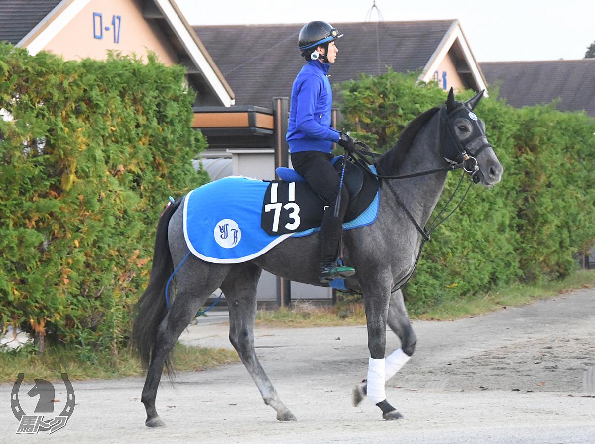 レースガーデンの馬体写真