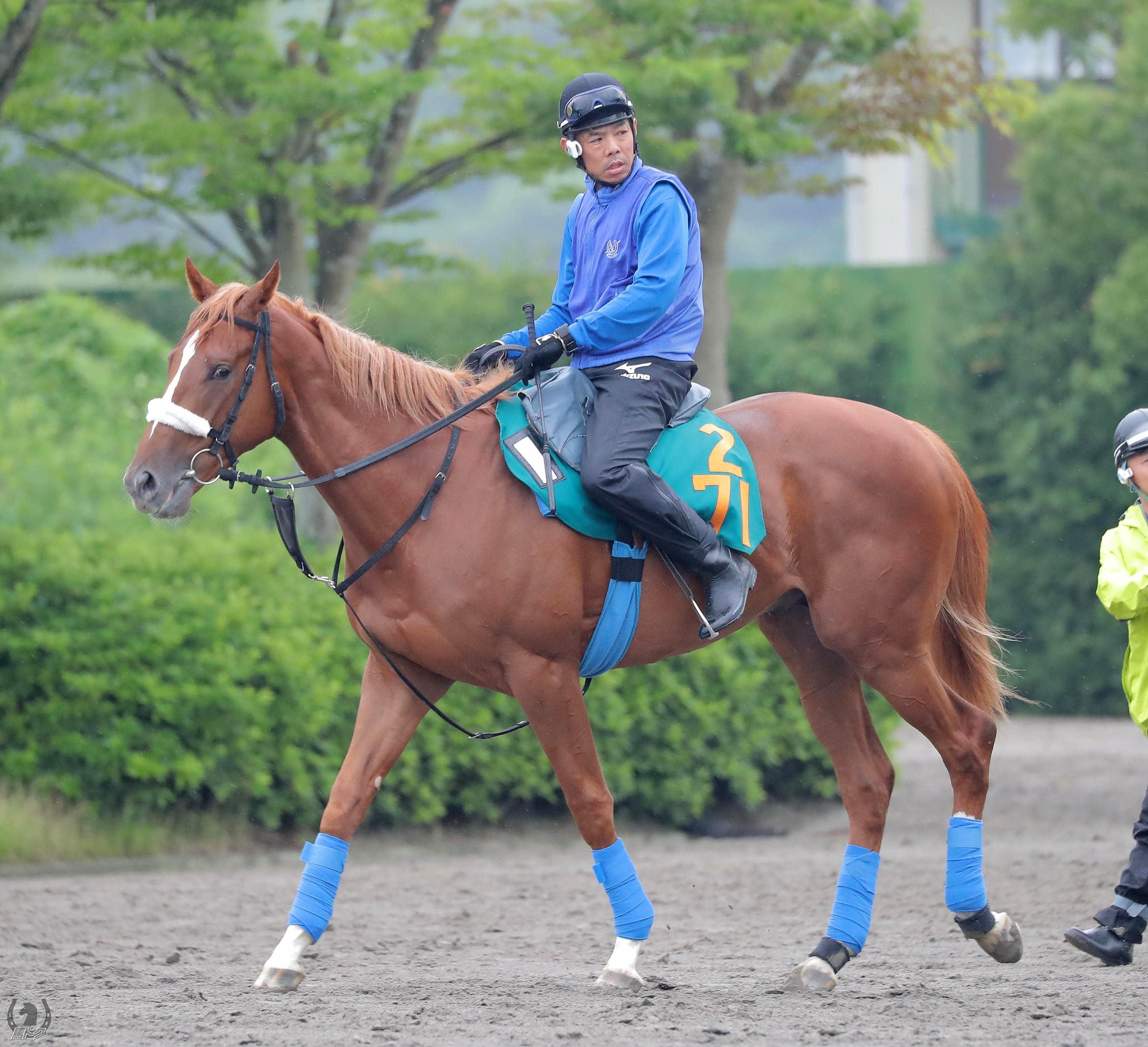 イヴォークの馬体写真