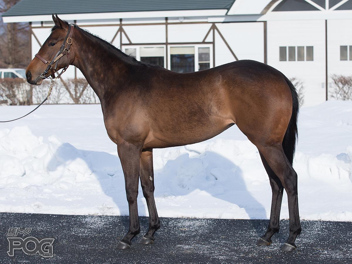 アーズローヴァーの馬体写真