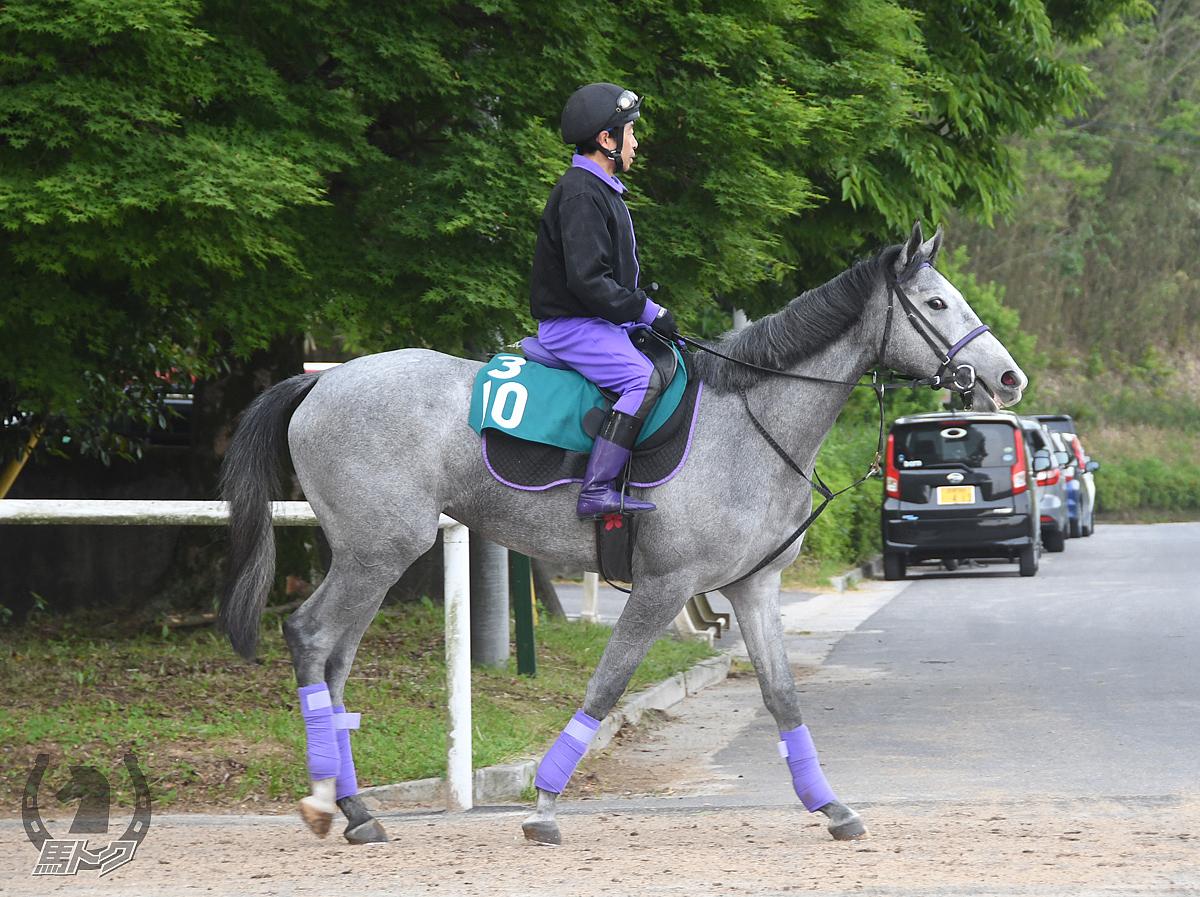 ウォーターヴィラの馬体写真
