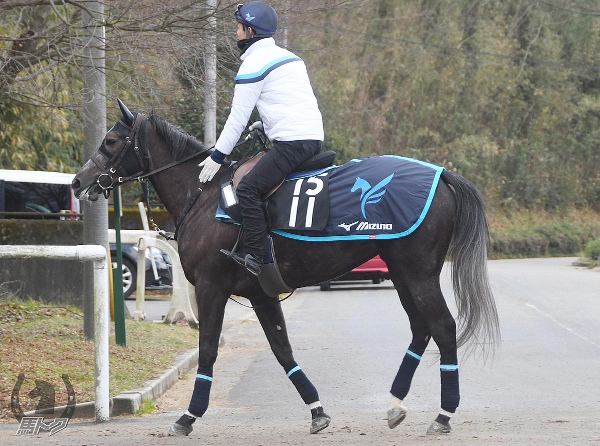 テイクザヘルムの馬体写真
