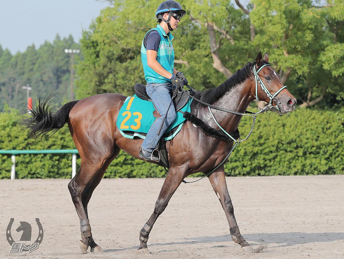 バスクベレーの馬体写真
