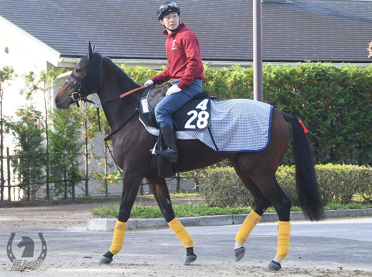 シトラスノートの馬体写真