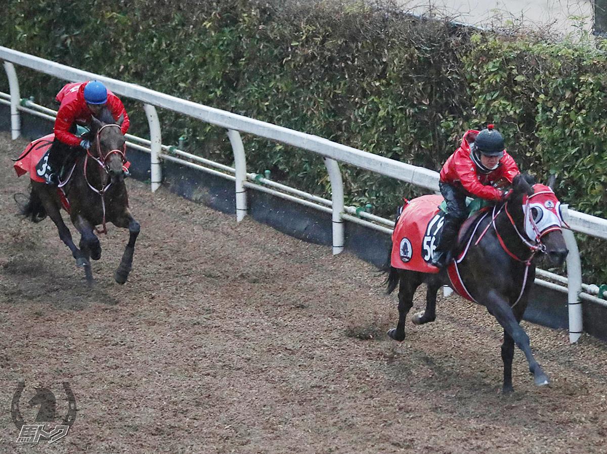 ミッキーブリランテの馬体写真