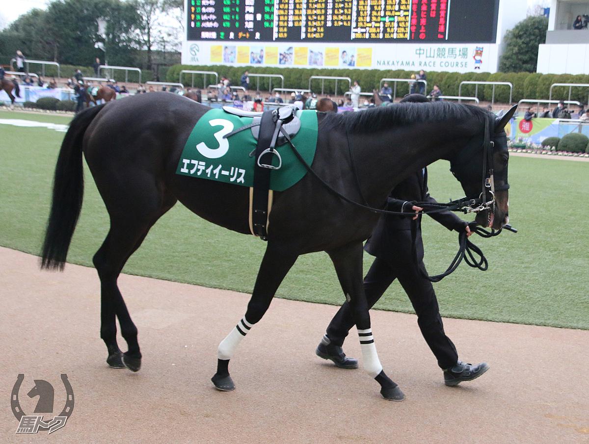 エフティイーリスの馬体写真