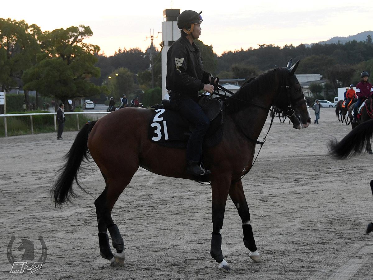 カフジローズの馬体写真