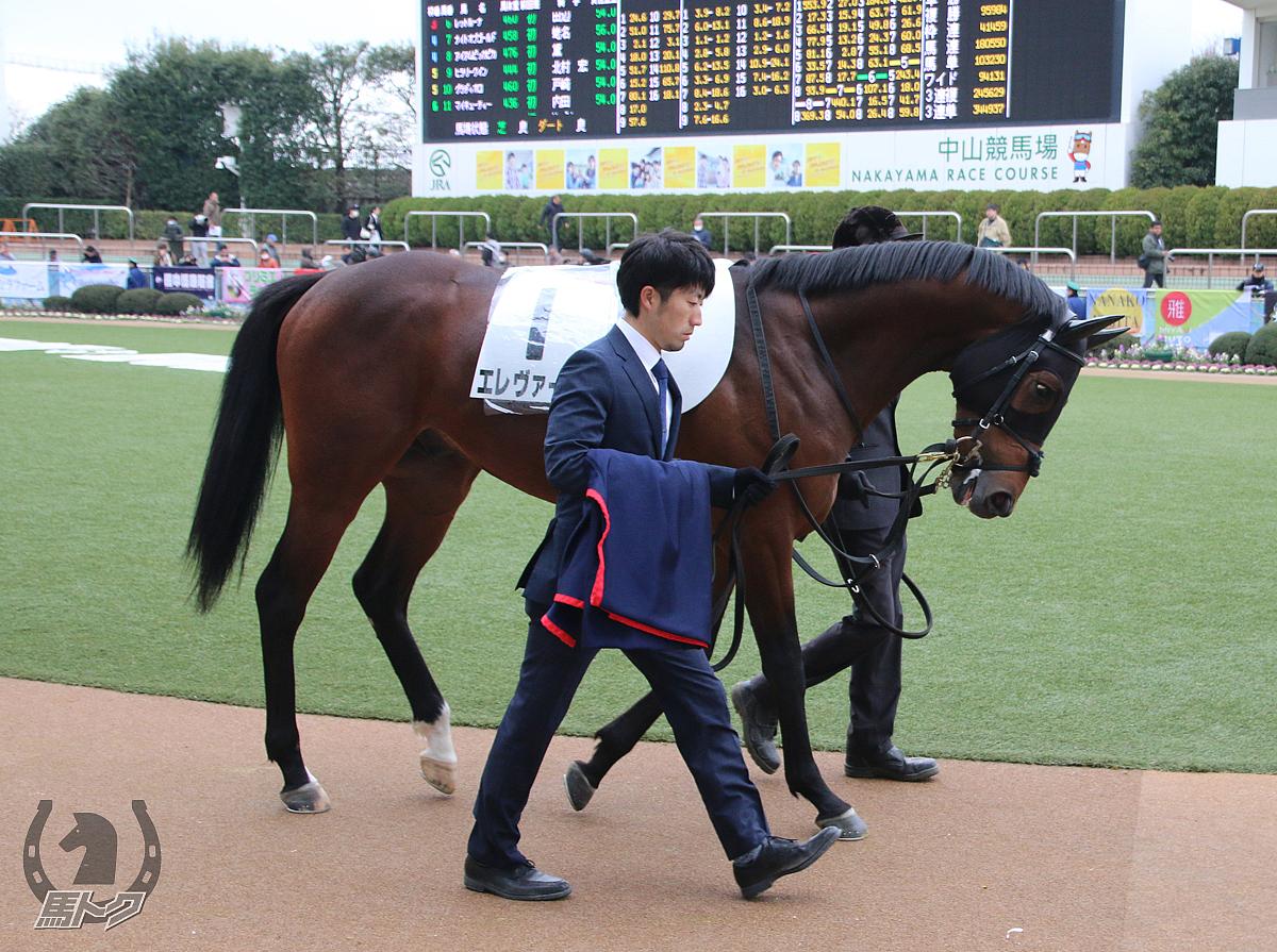エレヴァージュの馬体写真