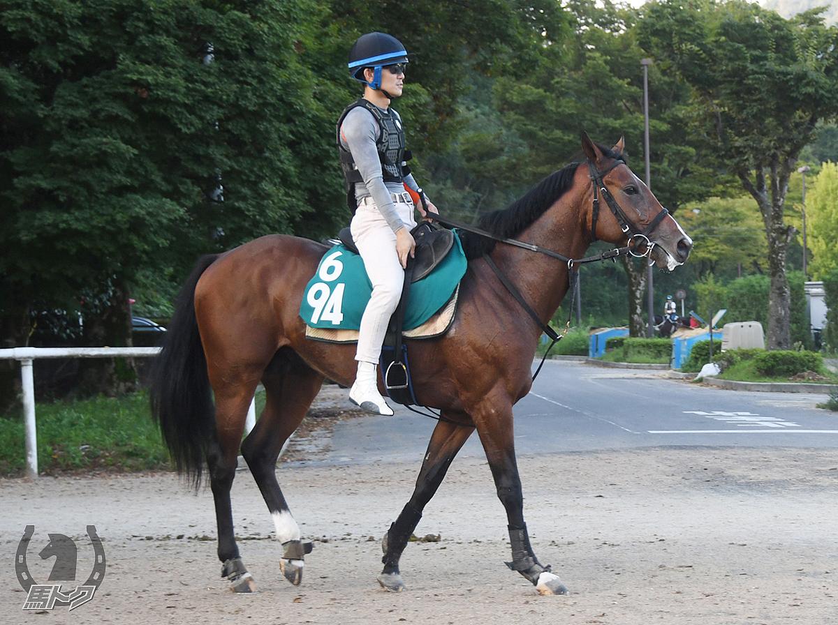 アドマイヤレオの馬体写真