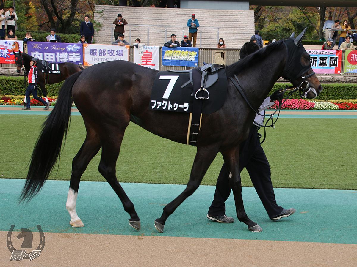 ファクトゥーラの馬体写真