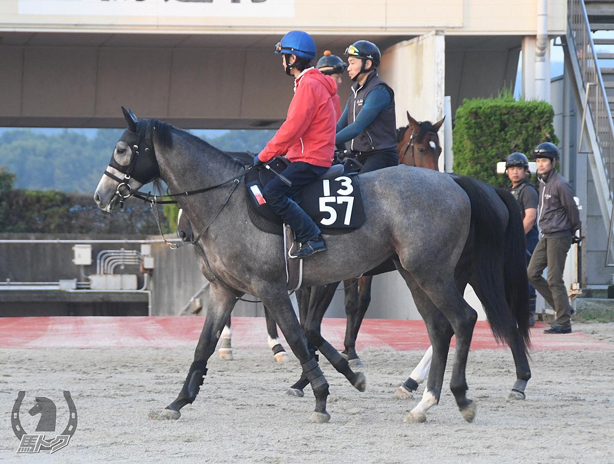 ゴーストの馬体写真