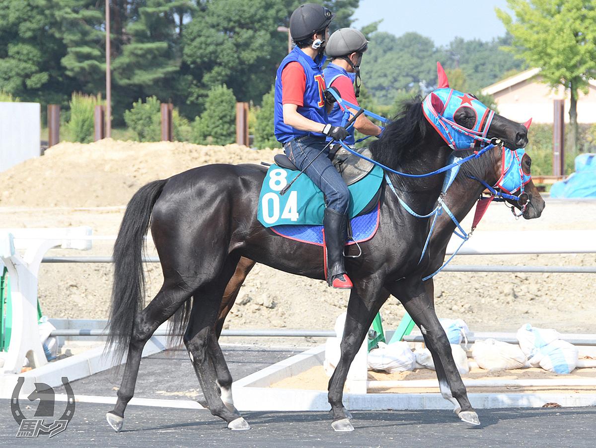 スカーヴァティの馬体写真