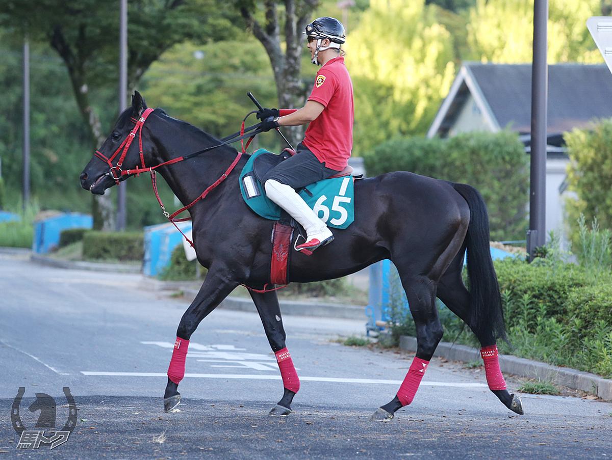 ジャカランダシティの馬体写真