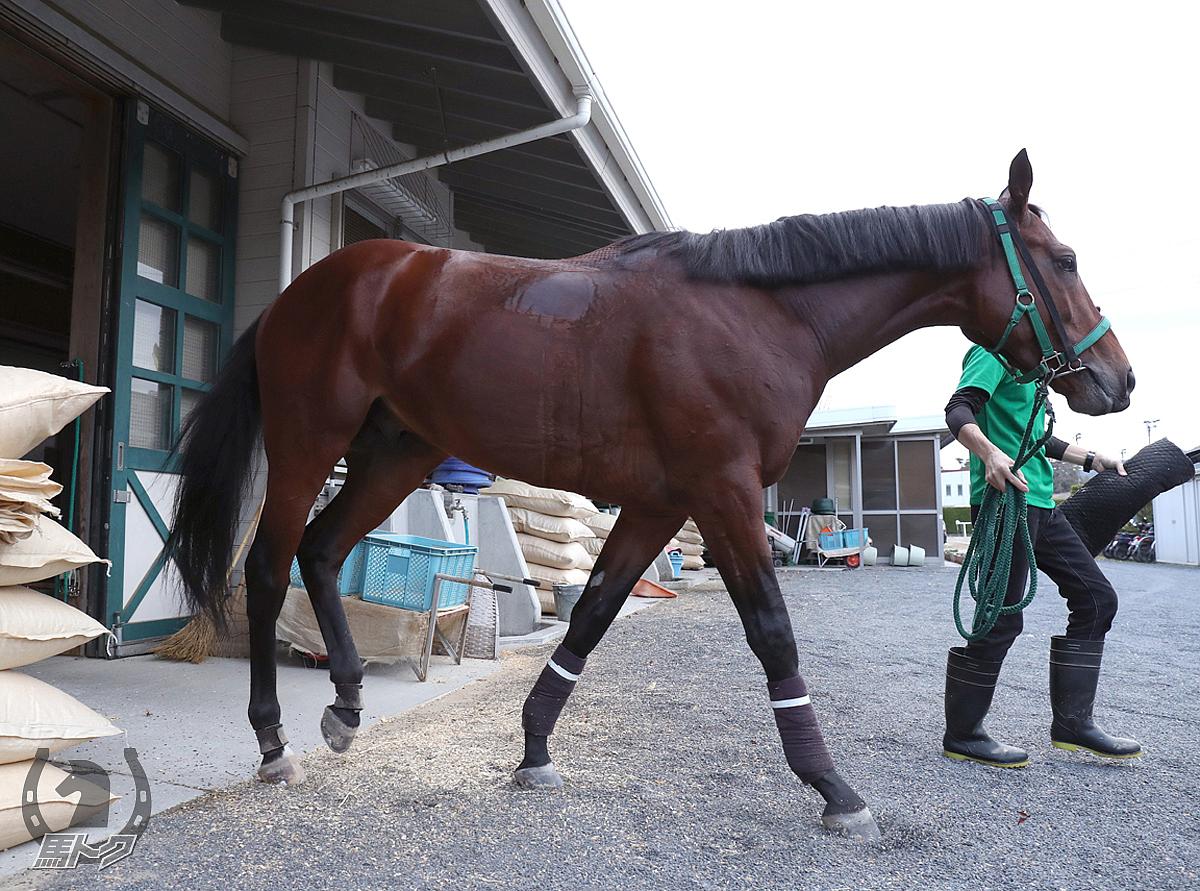 クリソベリルの馬体写真