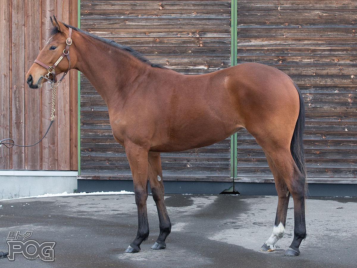 クルミネイトの馬体写真