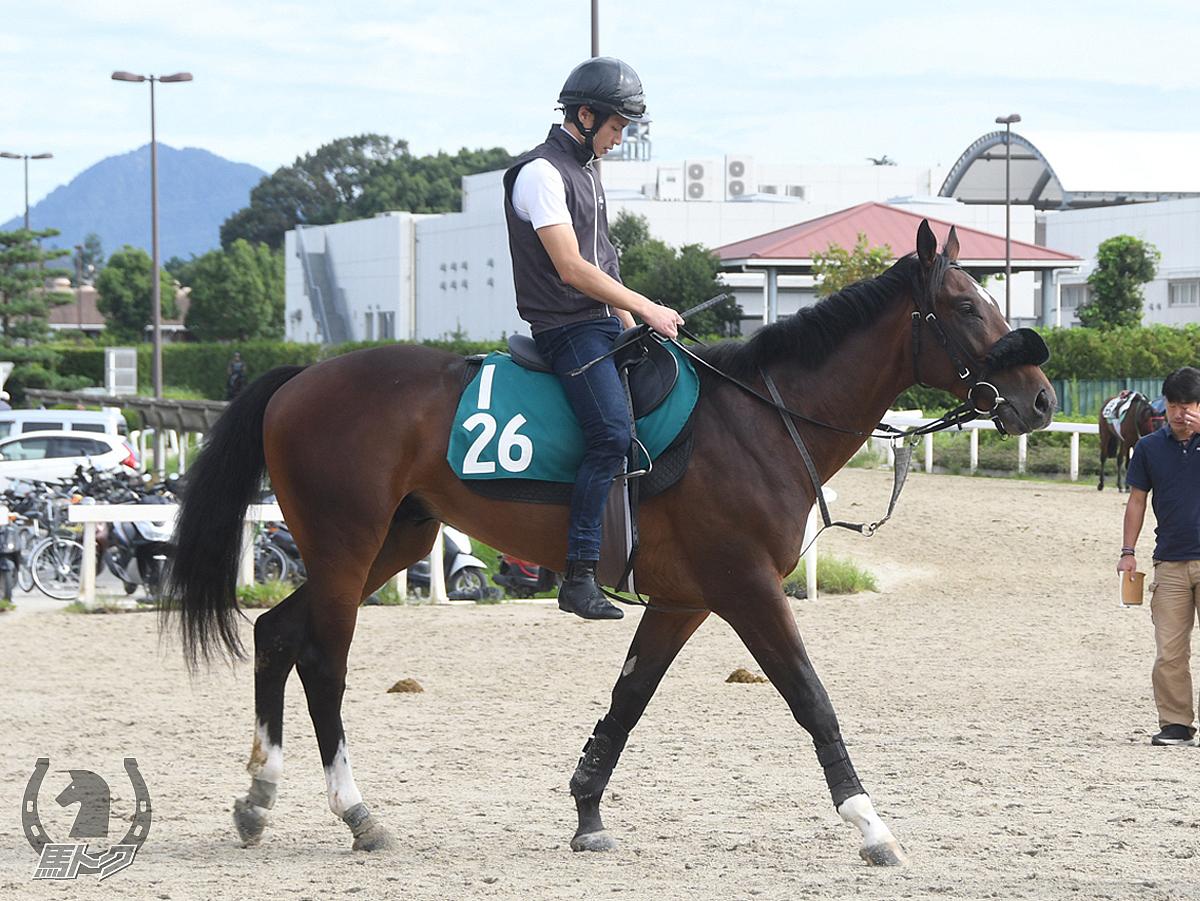 ピサノメタルシティの馬体写真