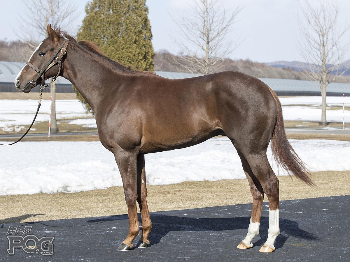 レッドクレオスの馬体写真