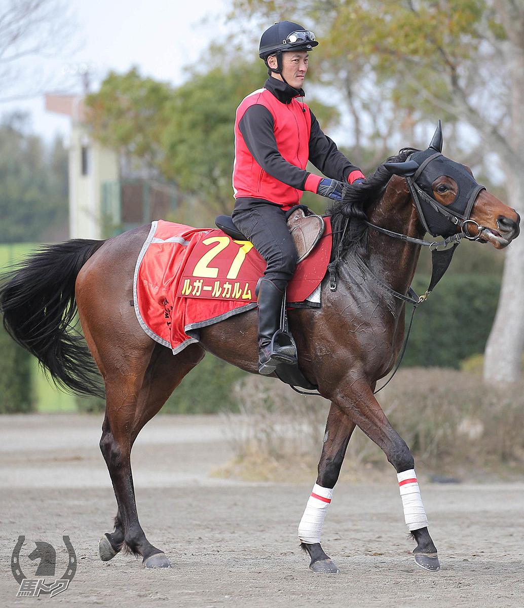 ルガールカルムの馬体写真